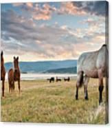 Curious Horses Canvas Print