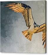 Curious Osprey Canvas Print