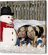 Curious Piglets And Snowman Canvas Print