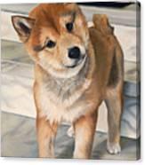 Curious Shiba Inu Canvas Print