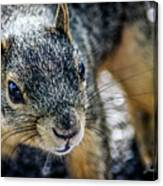 Curious Squirrel Canvas Print