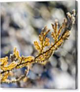 Curled Fern Frond Tip Canvas Print