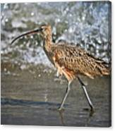 Curlew And Tides Canvas Print