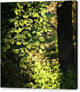 Curtain Of Leaves Canvas Print