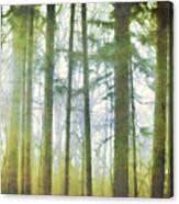 Curtain Of Morning Light Canvas Print