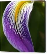 Curve Of An Iris Canvas Print