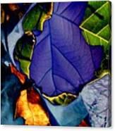 Curved Leaf Canvas Print