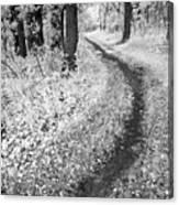 Curving Path Through Woods Canvas Print