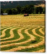 Cut Hay In Field Canvas Print