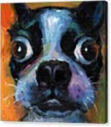 Cute Boston Terrier Puppy Art Canvas Print