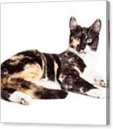 Cute Calico Kiten Sticking Tongue Out Canvas Print