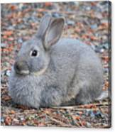 Cute Campground Rabbit Canvas Print