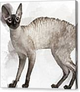 Cute Cornish Rex Youngster Canvas Print