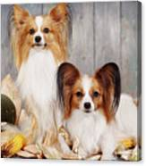cute couple dogs breed papillon by Iuliia Malivanchuk  Canvas Print