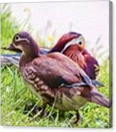 Cute Couple - Mandarin Ducks Canvas Print