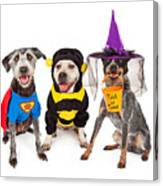 Cute Dogs Wearing Halloween Costumes Canvas Print
