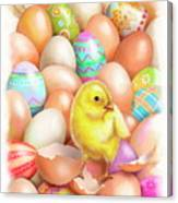 Cute Easter Chick Canvas Print