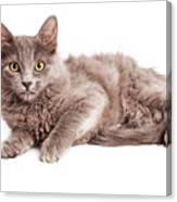 Cute Kitten Laying Over White Loking Forward Canvas Print