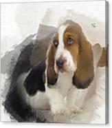 Cute Little Basset Artesien Normand Puppy Canvas Print