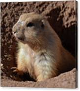 Cute Prairie Dog Climbing Out Of A Hole Canvas Print