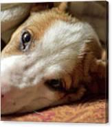 Cute Puppy Cuddles Canvas Print