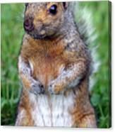 Cute Squirrel In The Park  Canvas Print