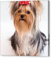 Cute Yorkie Puppy With Red Bow Canvas Print