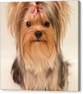Cute Yorkie Canvas Print