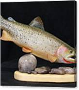 Cutthroat Trout On The Rocks Canvas Print