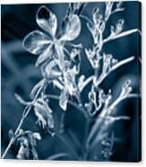 Cyanotype Morn Canvas Print