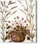 Cyclamen & Lavender, 1613 Canvas Print