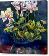 Cyclamen In A Vase Canvas Print