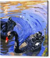 Cygnus Atratus Canvas Print