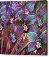 Cymbidium Carnival Canvas Print