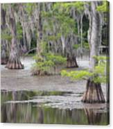 Cypress And Spanish Moss Of Caddo Lake State Park 4 Canvas Print