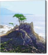 Cypress At Carmel Canvas Print