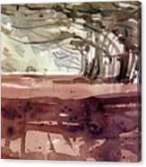 Cypress At Moss Beach Canvas Print