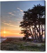 Cypress At Sunset Canvas Print