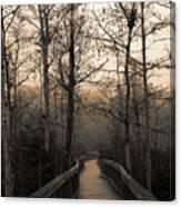 Cypress Boardwalk Canvas Print