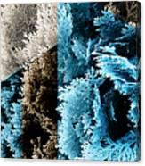 Cypress Branches No.3 Canvas Print