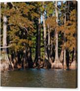 Cypress Grove Five Canvas Print