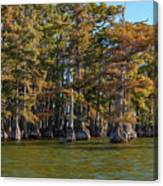 Cypress Grove Four Canvas Print