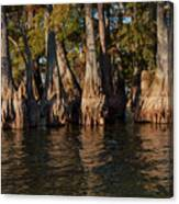 Cypress Grove Two Canvas Print