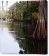 Cypress High Water Mark Canvas Print