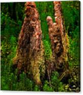 Cypress Knees Canvas Print