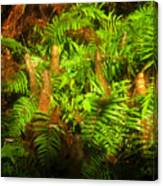 Cypress Knees In Ferns Canvas Print