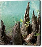 Cypress Knees In The Mist Canvas Print