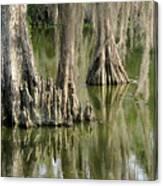 Cypress Knees Canvas Print