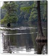 Cypress Lake Canvas Print