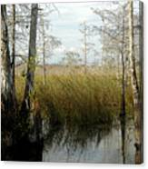 Cypress Landscape Canvas Print